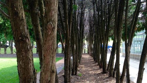 Trees-WalkerSculptureGarden©NJN